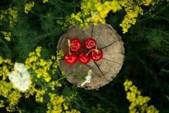 Κεράσι σε ένα κομμάτι του ξύλου Στοκ φωτογραφία με δικαίωμα ελεύθερης χρήσης