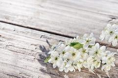 Κεράσι, aple, λουλούδια δέντρων δαμάσκηνων στην αγροτική άσπρη ξύλινη επιφάνεια Στοκ εικόνα με δικαίωμα ελεύθερης χρήσης