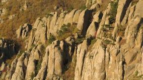 Κεραία για την κλίση του βουνού στα τέλη του φθινοπώρου με τη μαραμένη χλόη και τα πράσινα δέντρα πεύκων πλάνο Τοπίο φθινοπώρου τ απόθεμα βίντεο