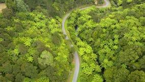 Κεραία, δρόμος βουνών της Νέας Ζηλανδίας μέσω του δάσους φτερών