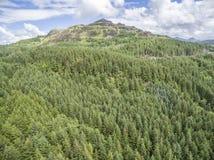 Κεραία ενός δάσους σε Argyll Στοκ Εικόνα