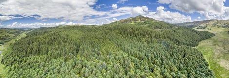 Κεραία ενός δάσους σε Argyll Στοκ Εικόνες