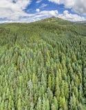 Κεραία ενός δάσους σε Argyll Στοκ φωτογραφίες με δικαίωμα ελεύθερης χρήσης