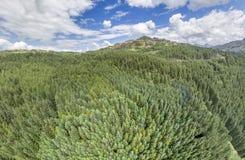 Κεραία ενός δάσους σε Argyll Στοκ φωτογραφία με δικαίωμα ελεύθερης χρήσης