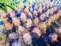 Κεραία πέρα από τα χειμερινά δέντρα καφετιά και που ρίχνουν τις σειρές φύλλων τους και τις σειρές Στοκ εικόνες με δικαίωμα ελεύθερης χρήσης