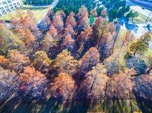 Κεραία πέρα από τα χειμερινά δέντρα καφετιά και που ρίχνουν τις σειρές φύλλων τους και τις σειρές Στοκ εικόνα με δικαίωμα ελεύθερης χρήσης