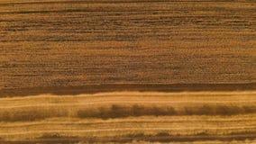 Κεραία πέρα από την άποψη από έναν μερικώς κομμένο ώριμο τομέα σίτου Πανοραμική μετακίνηση πέρα από το σίτο Αγροτική παραγωγή του φιλμ μικρού μήκους