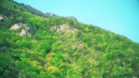 Κεραία: πέταγμα από το λόφο το καλοκαίρι απόθεμα βίντεο