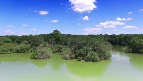 Κεραία της κονσέρβας φύσης στην κεντρική Φλώριδα φιλμ μικρού μήκους