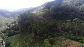Κεραία του δρόμου κοντά στο δάσος στην αιχμή του Adam στη Σρι Λάνκα απόθεμα βίντεο