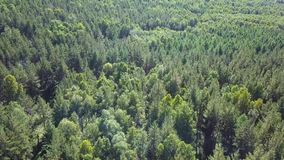 Κεραία του πετάγματος πέρα από ένα όμορφο πράσινο δάσος σε ένα αγροτικό τοπίο απόθεμα βίντεο