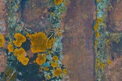 Κεραμίδια υποβάθρου με το βρύο Στοκ φωτογραφία με δικαίωμα ελεύθερης χρήσης
