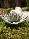 Κεραμικό λουλούδι της Γεωργίας σαβανών Στοκ εικόνα με δικαίωμα ελεύθερης χρήσης