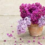 Κεραμικό δοχείο με έναν κλάδο του ιώδους λουλουδιού Στοκ Φωτογραφίες