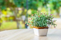 Κεραμικό flowerpot στον ξύλινο πίνακα στο καθιστικό στοκ εικόνες