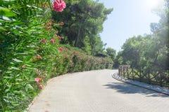 Κεραμωμένος δρόμος με τον ξύλινο φράκτη στους σωστούς και πράσινους θάμνους με τα πορφυρά λουλούδια στο αριστερό στοκ φωτογραφία με δικαίωμα ελεύθερης χρήσης