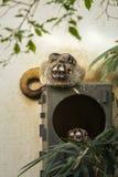 κερκοπίθηκοι Στοκ Φωτογραφίες