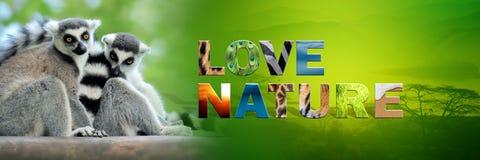 Κερκοπίθηκος με τη φύση αγάπης κειμένων Στοκ Εικόνες
