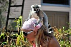 Κερκοπίθηκος στο κεφάλι Στοκ φωτογραφία με δικαίωμα ελεύθερης χρήσης
