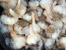Κεφάλια ή βολβοί σκόρδου για την πώληση Στοκ Εικόνες