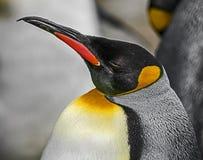 Κεφάλι βασιλιάδων penguin ` s Στοκ εικόνες με δικαίωμα ελεύθερης χρήσης