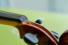 Κεφάλι βιολιών στο πράσινο υπόβαθρο στοκ φωτογραφία