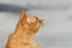 κεφάλι γατών στοκ φωτογραφία