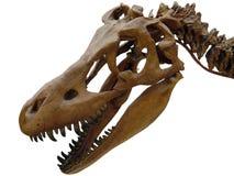 κεφάλι δεινοσαύρων Στοκ εικόνα με δικαίωμα ελεύθερης χρήσης