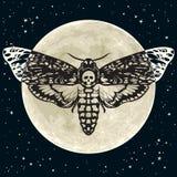 Κεφάλι θανάτου hawkmoth στο υπόβαθρο πανσελήνων και νυχτερινού ουρανού Πεταλούδα σκώρων κρανίων διάνυσμα Στοκ φωτογραφία με δικαίωμα ελεύθερης χρήσης