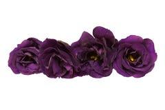 Κεφάλι λουλουδιών του eustoma Στοκ Φωτογραφία
