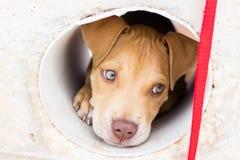 Κεφάλι σκυλιών κουταβιών Στοκ εικόνες με δικαίωμα ελεύθερης χρήσης