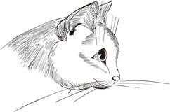 κεφάλι σχεδίου γατών συμ απεικόνιση αποθεμάτων
