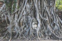 Κεφάλι του Βούδα στις ρίζες δέντρων σε Wat Mahathat Στοκ εικόνες με δικαίωμα ελεύθερης χρήσης