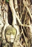 Κεφάλι του Βούδα στις ρίζες δέντρων σε Wat Mahathat, Ayutthaya, Ταϊλάνδη Το Phra Nakhon Sri Ayutthaya είναι η παγκόσμια κληρονομι Στοκ εικόνα με δικαίωμα ελεύθερης χρήσης