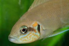 κεφάλι ψαριών Στοκ φωτογραφία με δικαίωμα ελεύθερης χρήσης