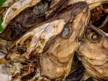 Κεφάλια Stockfish που κρεμούν για να ξεράνει Στοκ φωτογραφίες με δικαίωμα ελεύθερης χρήσης