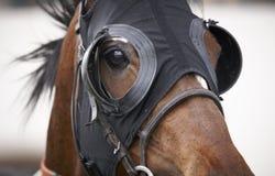 Κεφάλι αλόγων αγώνων με blinkers τη λεπτομέρεια Στοκ Εικόνες