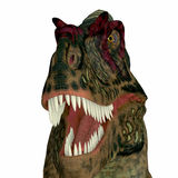 Κεφάλι δεινοσαύρων Albertosaurus Στοκ Εικόνες