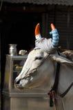 Κεφάλι ιερών αγελάδων με τα χρωματισμένα κέρατα στην οδό του Δελχί Στοκ εικόνες με δικαίωμα ελεύθερης χρήσης
