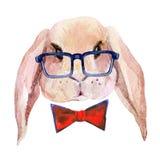 Κεφάλι κουνελιών στα γυαλιά Στοκ Φωτογραφία