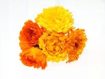 Κεφάλι λουλουδιών του calendula Στοκ Εικόνες