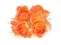 Κεφάλι λουλουδιών των τριαντάφυλλων Στοκ Φωτογραφία