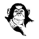 Κεφάλι πιθήκων (γραφική παράσταση) - χιμπατζές Στοκ εικόνες με δικαίωμα ελεύθερης χρήσης