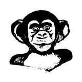 Κεφάλι πιθήκων (γραφική παράσταση) - χιμπατζές Στοκ Φωτογραφίες