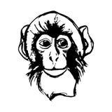 Κεφάλι πιθήκων (γραφική παράσταση) - macaque Στοκ Εικόνα