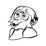 Κεφάλι πιθήκων (κατάπληξη) - χιμπατζές Στοκ Εικόνες