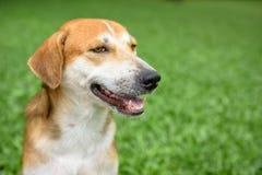 κεφάλι σκυλιών ανασκόπησης που απομονώνεται χαμόγελο whiete Στοκ φωτογραφίες με δικαίωμα ελεύθερης χρήσης
