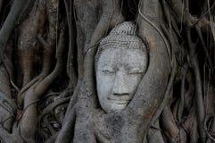 Κεφάλι του Βούδα που εισβάλλεται από το δέντρο σύκων στο ιστορικό πάρκο Wat Mahathat Ayutthaya Στοκ Φωτογραφίες
