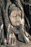 Κεφάλι του Βούδα που περιβάλλεται από τις ρίζες Στοκ φωτογραφία με δικαίωμα ελεύθερης χρήσης
