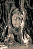 Κεφάλι του Βούδα που περιβάλλεται από τις ρίζες Στοκ φωτογραφίες με δικαίωμα ελεύθερης χρήσης